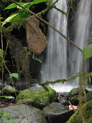 waterfall l sa