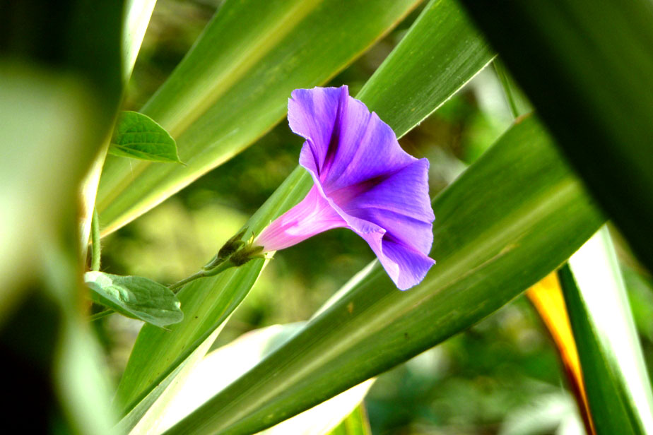 wild flower dbs